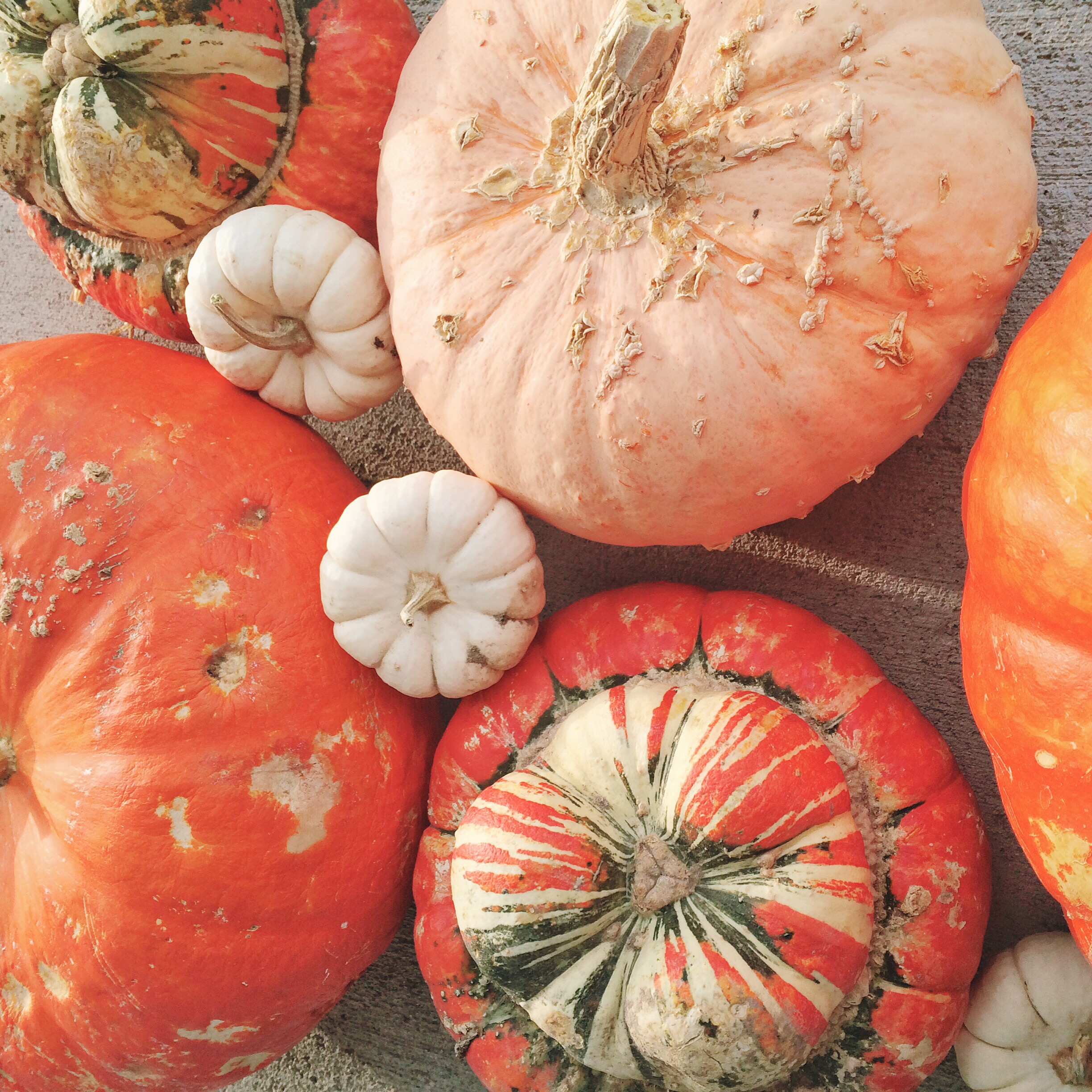 On Judging Pumpkins and People (and a Glorious Giveaway)