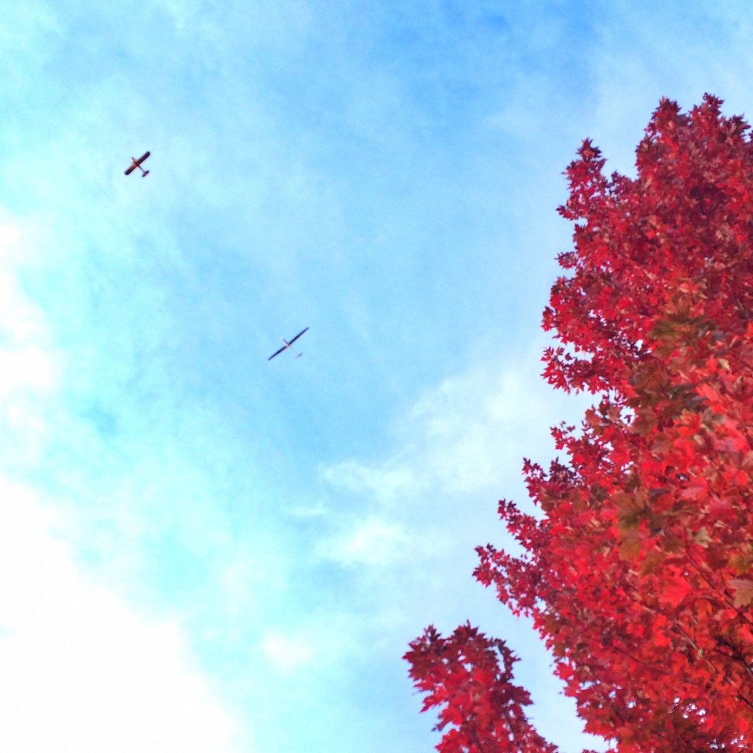RedMaple_Airplane_BlueSky